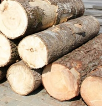 The largest annual auction of timber for processing held at BUCE