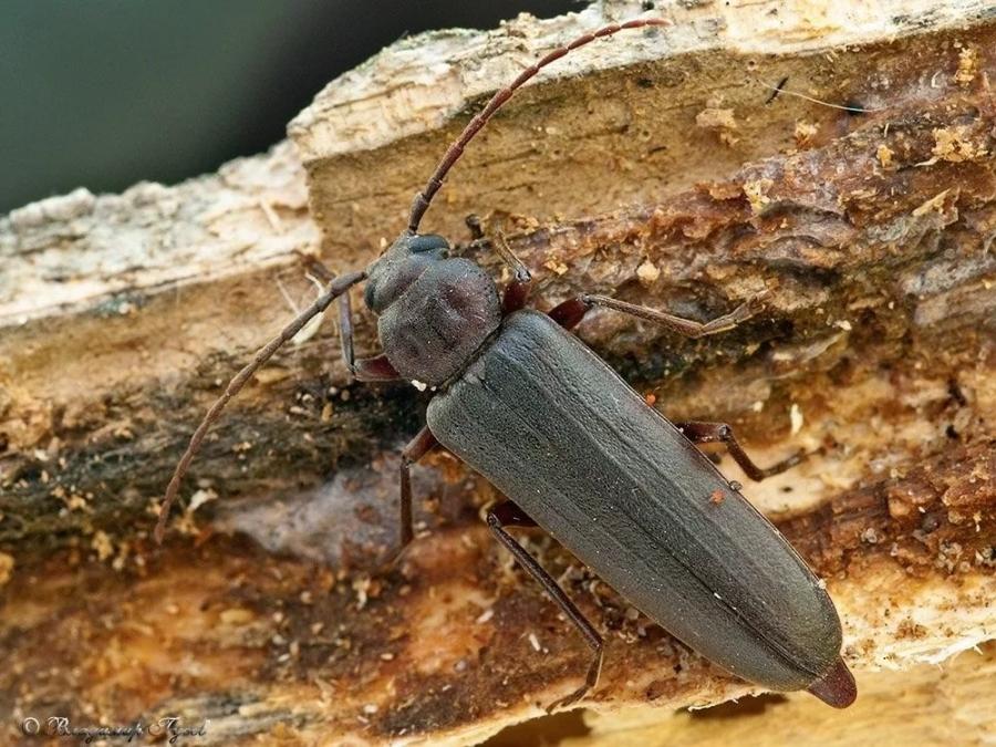 жуки едят дерево